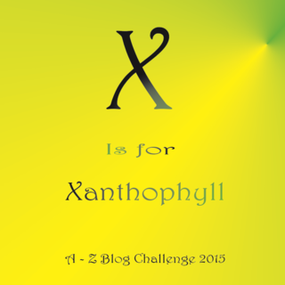 X is for xanthophyll