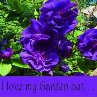 I love my garden (718x718)